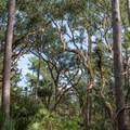 Maritime forest.- White Point Beach Hike