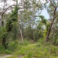 The forest closes in around the last section of trail.- White Point Beach Hike