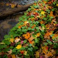 New growth and fall color along the Jordan River Pathway.- Jordan River Pathway