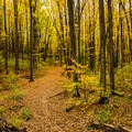 Dense forest in fall color along the Jordan River Pathway.- Jordan River Pathway
