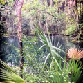 Shepard's Spring.- Cathedral of Palms Trail