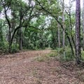 Access trail.- Cathedral of Palms Trail