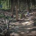Lower Fromme Bike Loop.-  Mount Fromme Trails: Lower Fromme Bike Loop