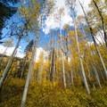 The trail goes through an aspen grove.- Mystic Falls
