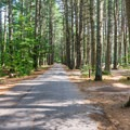 Campground road.- Bear Brook State Park Campground