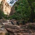 Riverside Walk, Zion National Park.- Riverside Walk