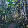 Horse Rock Ridge Trail through the forest.- Horse Rock Ridge