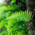 Small fern growing near the cave.- Horse Rock Ridge