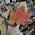 Autumn on the Ice Age Trail.- Ice Age Trail
