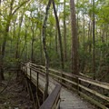 The Boardwalk Trail leads from the visitor center out into the forest.- Boardwalk Trail