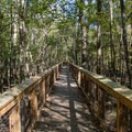 Elevated boardwalk, which stays accessible during floods.- Boardwalk Trail