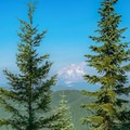 Mount Hood from the summit of Wildcat Mountain.- Wildcat Mountain via Douglas Trail
