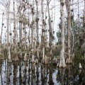 Cypress trees reflected in the water.- Loop Road Scenic Drive