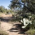 A walking trail through the campground.- Piñyon Flat Campground