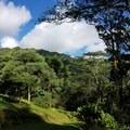 Lush greenery in the Lyon Arboretum.- Harold L. Lyon Arboretum