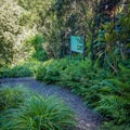 Trails are mostly gravel and well-maintained.- Harold L. Lyon Arboretum