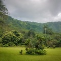 The grounds have sweeping views of the Ko'olau Mountains.- Harold L. Lyon Arboretum