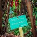 Most of the plants have identification markers.- Harold L. Lyon Arboretum