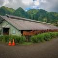 Research and greenhouse facilities.- Harold L. Lyon Arboretum