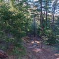 Descending into the trees.- Shanahan Forks Loop