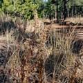 Interesting plants along the trail.- Shanahan Forks Loop