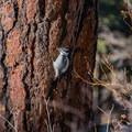 Keep an eye out for birds.- Shanahan Forks Loop
