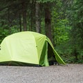 Tent camping at Liard River Hot Springs Campground.- Liard River Hot Springs Campground