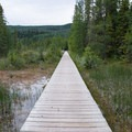A boardwalk leads over a warm marsh to the hot springs pool.- Liard River Hot Springs Campground