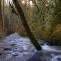 Icy Creek Springs flowing toward the Green River.- Icy Creek Spring in the Green River Gorge