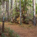 The trail and junctions are well marked.- Palmetto Trail: Awendaw Passage