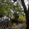 A footbridge crossing a creek.- Palmetto Trail: Awendaw Passage