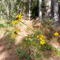 Wildflowers blooming in early fall.- Palmetto Trail: Awendaw Passage