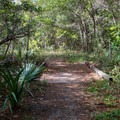 Diverse forest understory.- Palmetto Trail: Awendaw Passage