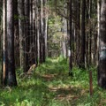 The beginning/end of the Swamp Fox Passage, which continues the Palmetto Trail inland.- Palmetto Trail: Awendaw Passage