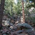 Climbing through the trees.- South Boulder Peak via Shadow Canyon