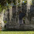 Spanish moss in the trees.- Chapel of Ease Ruins