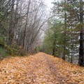 Late fall leaves covering the trail. - Pend d'Oreille Bay Trail