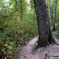 A view of the interesting hiking trail.- Whitaker Point Trail + Hawksbill Crag