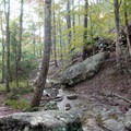 The creek along the trail.- Whitaker Point Trail + Hawksbill Crag