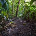 The trail can be a little bit muddy.- Haipua'ena Falls