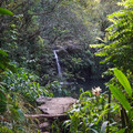 First views of Haipua'ena Falls pool from the trail.- Haipua'ena Falls
