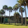 Impressive palms surrounding the mansion.- Atalaya