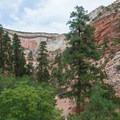 Wide view of Petroglyph Canyon.- Zion's Petroglyph Canyon