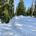 The snowshoe trail runs alongside the groomed cross-country trails.- Hollyburn Mountain Snowshoe