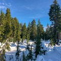 Wander through frozen tarns and meadows.- Hollyburn Mountain Snowshoe