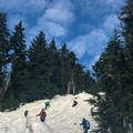Some portions of the trail exceed 30% towards the summit.- Hollyburn Mountain Snowshoe