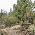 Mountain mahogany along the Big Nasty Trail.- Big Nasty Trail + Hidden Valley