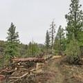Views along the Big Nasty Trail.- Big Nasty Trail + Hidden Valley