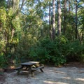 A site with decent privacy surrounded by bushes.- Myrtle Beach State Park Campground