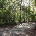 Typical site at Myrtle Beach State Park.- Myrtle Beach State Park Campground